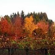 Autumn Colors In The Vineyard Art Print