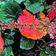 Autumn Composition One Art Print