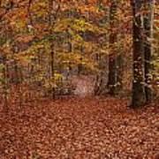 Autumn Creekside Trail Art Print