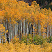 Autumn Curtain Art Print