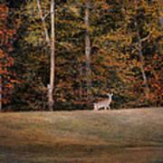 Autumn Deer Art Print