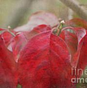 Autumn Dodwood Leaves Art Print