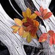 Autumn Driftwood 2 Art Print