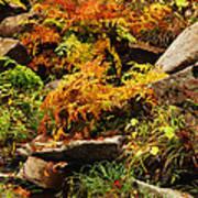 Autumn Ferns On Pickle Creek At Hawn State Park Art Print
