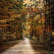 Autumn Forest 3 Art Print