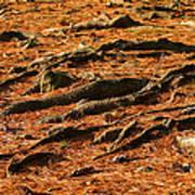 Autumn Forest Floor Art Print