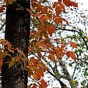 Autumn Glory At Tannehill Art Print