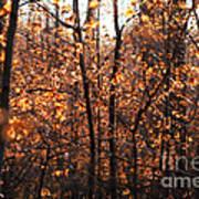 Autumn Glory Art Print by Chris Hill