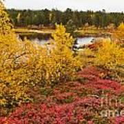 Autumn In Inari Art Print