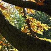 Autumn In London 7916 Art Print