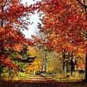 Autumn Lane Art Print