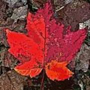 Autumn Leaf Art Iv Art Print