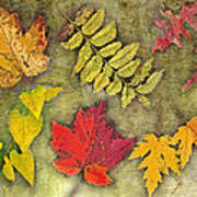 Autumn Leaf Collage Art Print