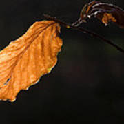 Autumn Leaf Art Print by Frits Selier