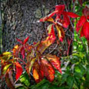 Autumn Leaves High On The Tree Trunk Art Print