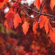 Autumn Leaves In Medford Art Print
