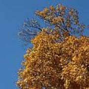 Autumn Leaves In Tn Art Print