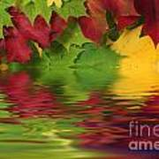 Autumn Leaves In Water With Reflection Art Print