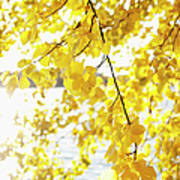 Autumn Leaves On Branch With Lake In Background, Close-up Art Print