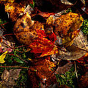 Autumn Leaves On The Moss Art Print