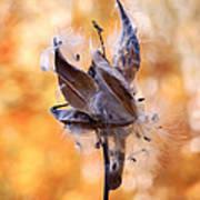 Autumn Milkweeds Art Print