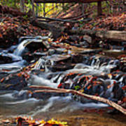 Autumn Moving Water With Foliage Art Print
