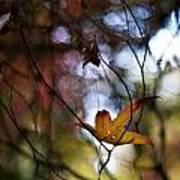 Autumn Mystere Art Print