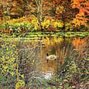 Autumn On Long Island Art Print