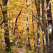 Autumn Path 2 Art Print