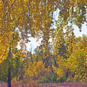Autumn Picnic Spot Art Print