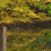 Autumn Reflections_0138 Art Print