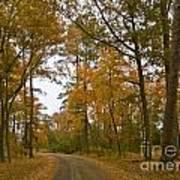 Autumn Road Colors Art Print