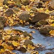 Autumn Slipping Away 0437 Art Print