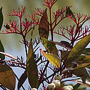 Autumn Snow Berry Bush Art Print