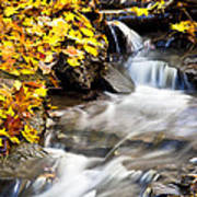 Autumn Stream No 3 Art Print