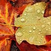 Autumn Treasures Art Print by Matthew Green