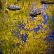 Autumn Tree Reflections With Rocks On The Muskegon River Art Print