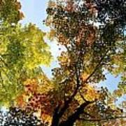 Autumn Trees Low-angle Art Print