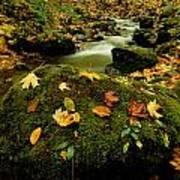 Autumn View Shows Fallen Leaves Art Print