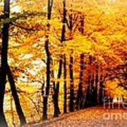 Autumn Walk In Belgium Art Print