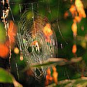 Autumn Web Art Print