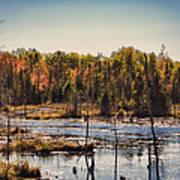 Autumn Wetland Art Print