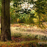 Autumn Woodland Art Print