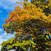 Autumnal Fruition Art Print