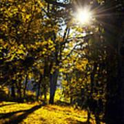 Autumnal Morning Art Print