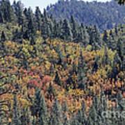 Autumns Palette Art Print