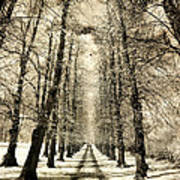 Avenue Of Trees Art Print