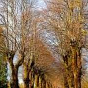Avenue Of Trees Art Print