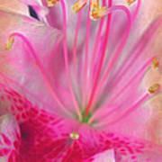 Azalea Art Print