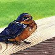 Baby Barn Swallow Art Print by Peggy Dreher